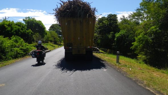 Overloaded sugar cane trucks