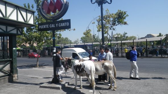 This guy is walking these donkeys around, selling fresh from the utter milk...