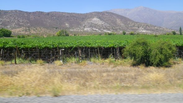 Passing a few Chilean vineyards along the way